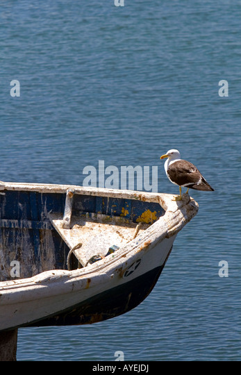 A gull sits on the bow of a boat at Concon Chile - Stock Image