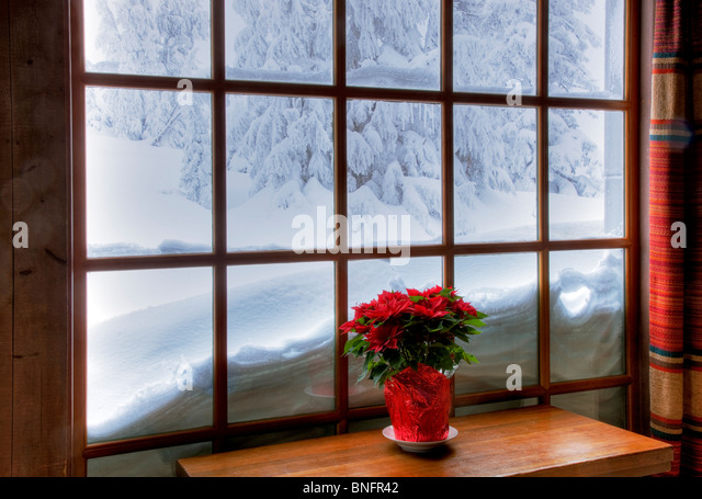 Window with poinsettia in winter at Timberline Lodge. Oregon - Stock-Bilder