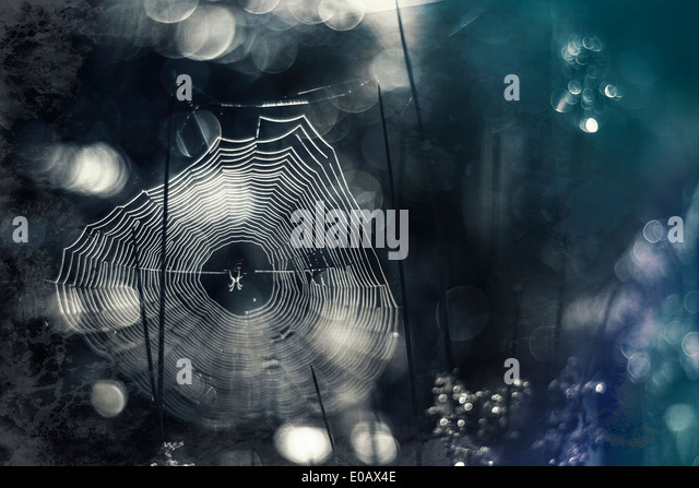 Germany, Bavaria, View of morning dew on spider web - Stock Image