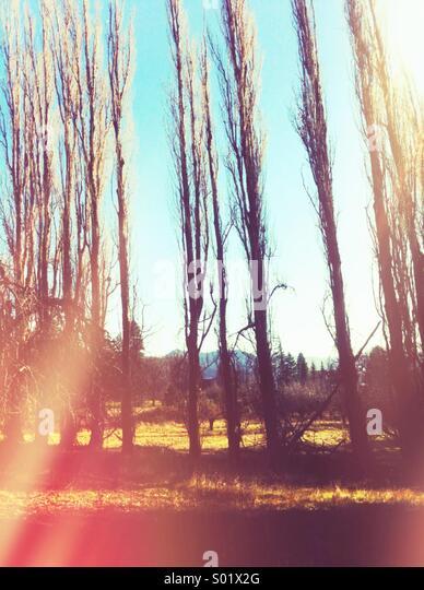 Trees - Stock-Bilder