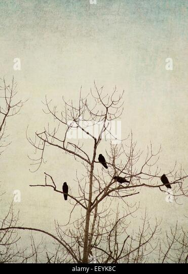 Birds perched in a tree during winter. - Stock-Bilder