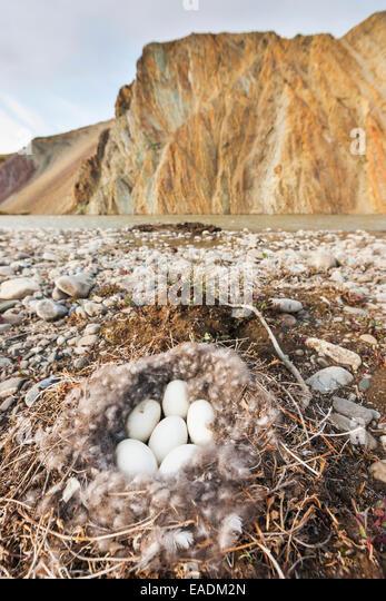 Trio Bald Eagle Nest Cam -Live