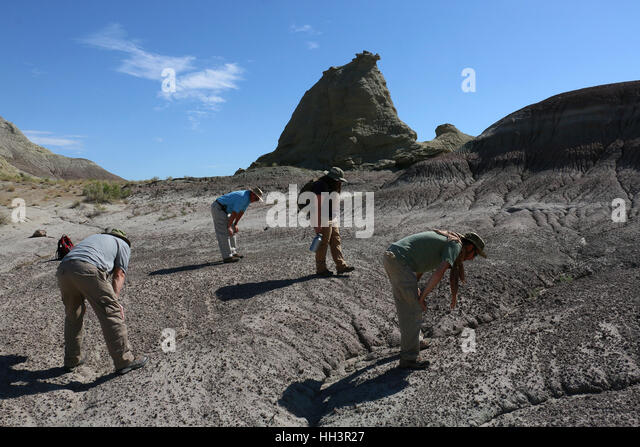 Paleontologists looking for fossils Utah Great Basin desert - Stock Image