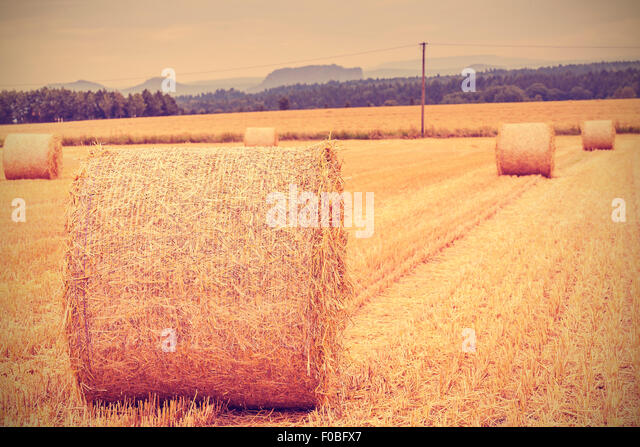 Vintage toned hay bales on harvested field, shallow depth of field. - Stock Image