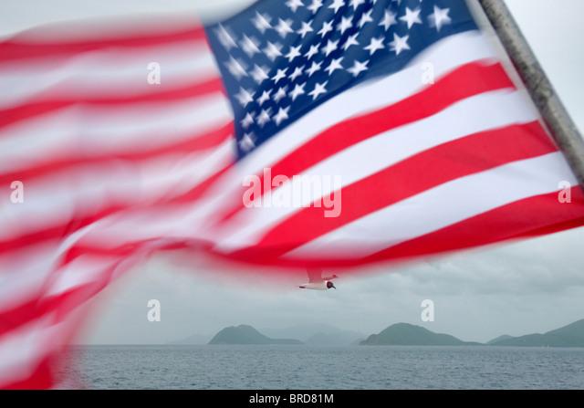 American flag with Venevualan laughing gull. Virgin Islands - Stock-Bilder