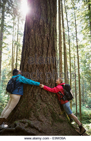 Women hugging tree in sunny woods - Stock Image