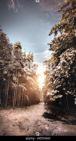 magical woods in winter - Stock Image