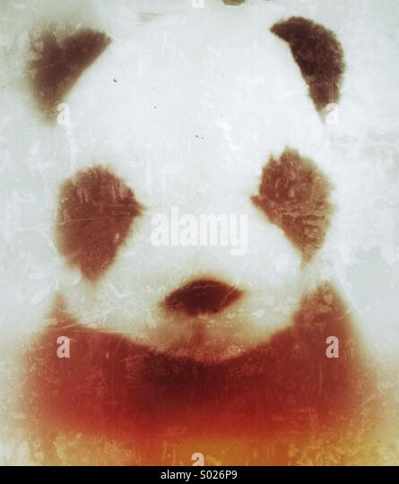 Toy panda on white grunge background - Stock Image