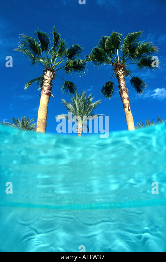 Palm trees seen from underwater in swimming pool blue water blue sky - Stock Image