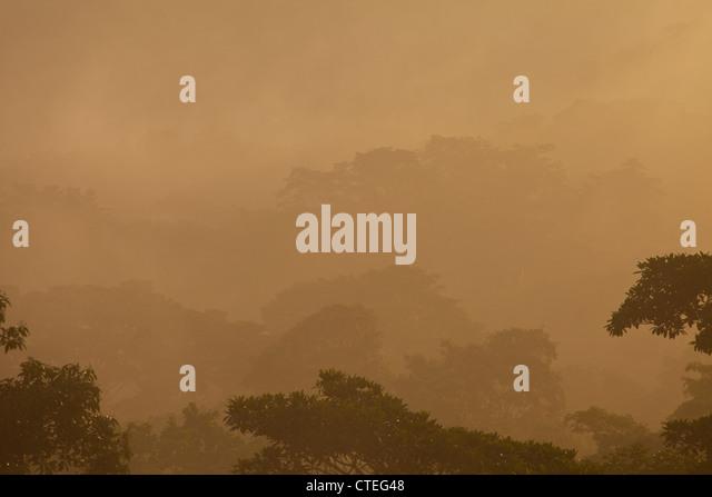 Mist at sunrise in Soberania national park, Republic of Panama. - Stock-Bilder