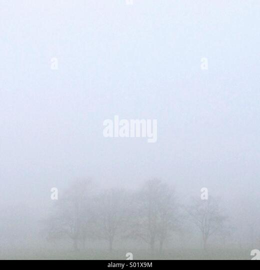 Foggy Trees - Stock Image