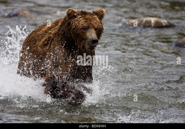 Ice Climber - Teddy Bear Magix EP