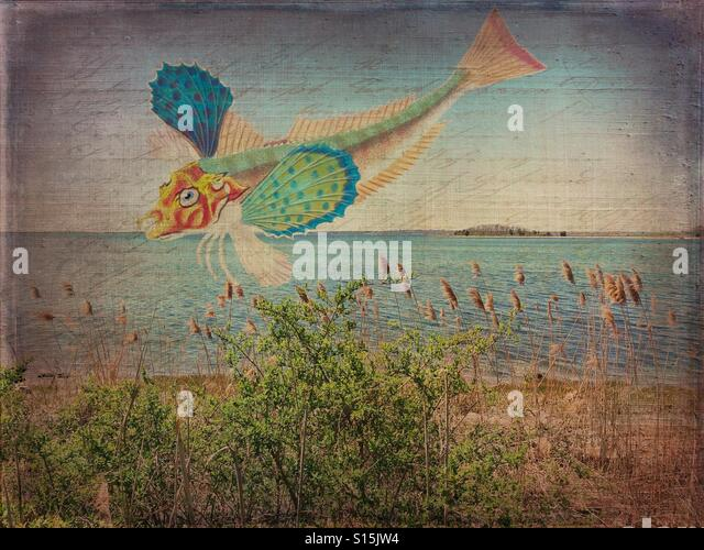 Flying Fish - Stock Image