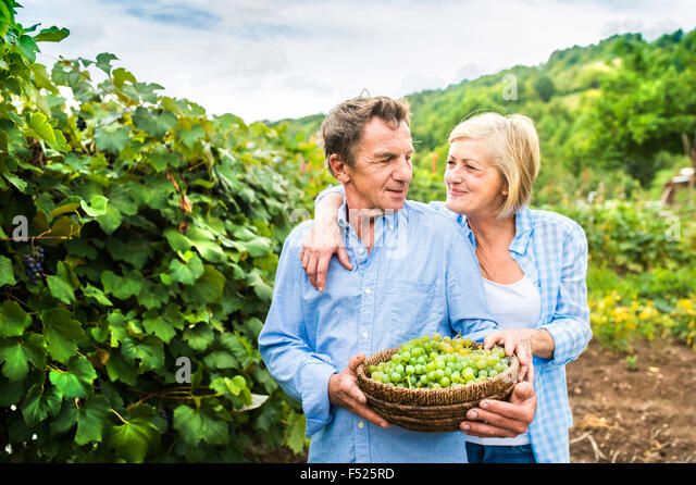 Couple harvesting grapes - Stock-Bilder