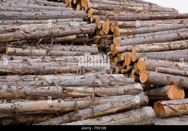 Mill cut stock photos mill cut stock images alamy for Pine tree timber