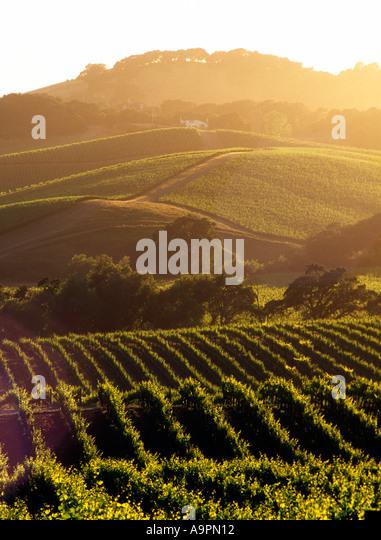 USA California Napa Valley grape vineyards - Stock Image