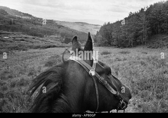 Horse whinnying in surprise - Stock Image