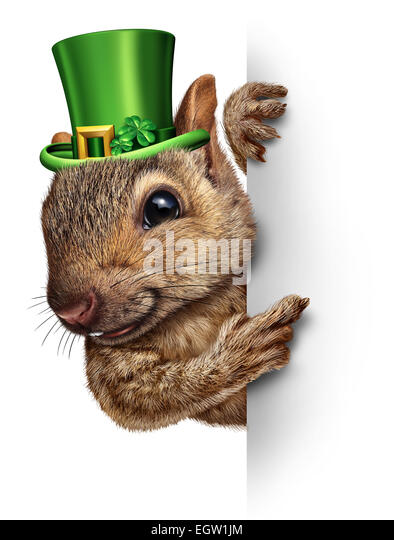 Spring squirrel banner concept as cute happy wildlife wearing a lucky green saint patricks day hat with four leaf - Stock-Bilder