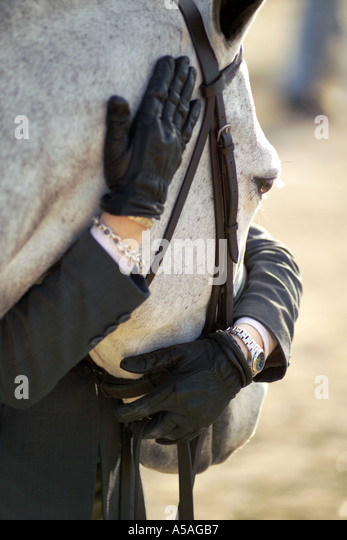 Young rider hugs her horse waiting turn at show - Stock Image