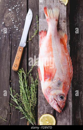 Raw grouper - Stock Image
