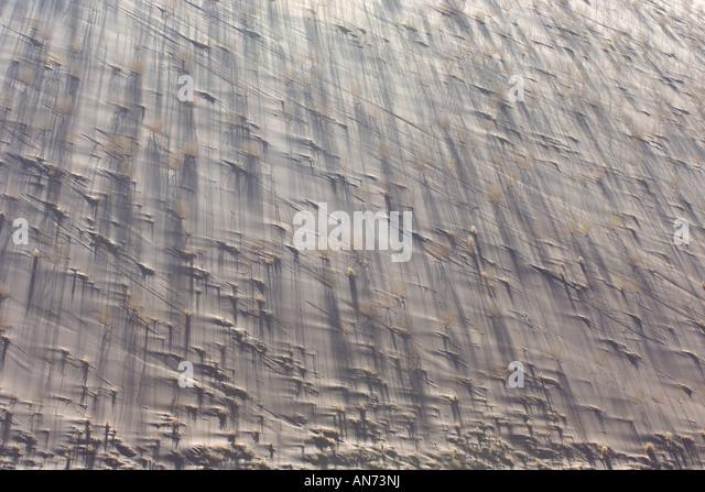 Detail of sand dune vegetation and shadows at Dead Vlei in Namib Desert in early morning light - Stock Image