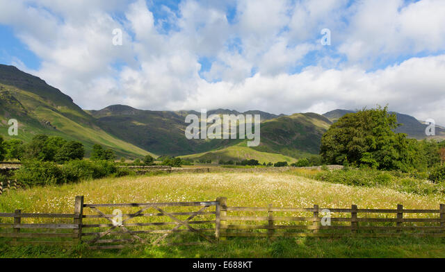 daisy field mountain sky - photo #34
