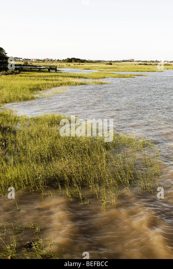 Florida Marshes - Stock Image