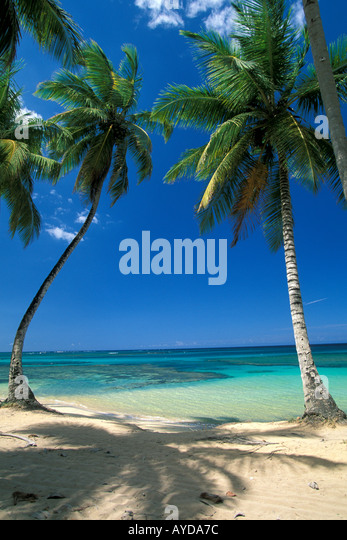 Tropical Beach Palm trees  dominican republic - Stock Image