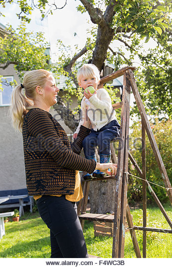 Sweden, Sodermanland, Jarna, Woman with boy (12-17 months) picking apples - Stock Image