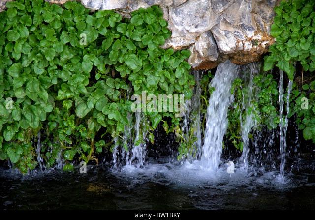 how to grow watercress nz