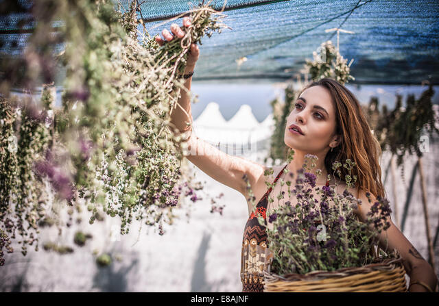 Young woman picking dried herbs, Castiadas, Sardinia, Italy - Stock Image