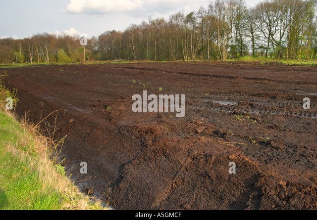 the discovery of lindow man essay The discovery of lindow woman, who was originally thought to be a modern murder victim, led to the confession of a man who murdered his wife and dumped her body in the area in 1960 when it was discovered that lindow woman died about 250 ad, the murdered tried unsuccessfully to recant his confession.