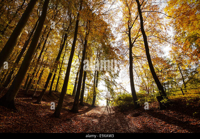 Mysterious autumn forest landscape. - Stock Image
