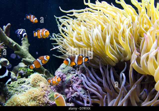 Mystic Aquarium Stock Photos & Mystic Aquarium Stock Images - Alamy