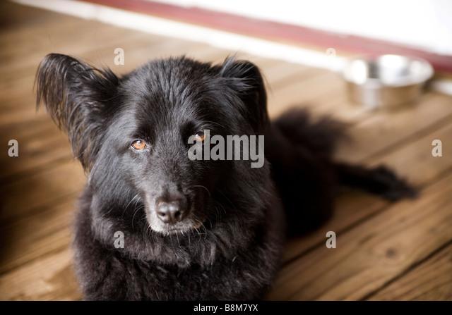 dog sitting outside - Stock Image