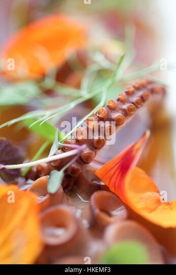 fresh raw squid tentacle. sucker, fish, raw, food. - Stock Image