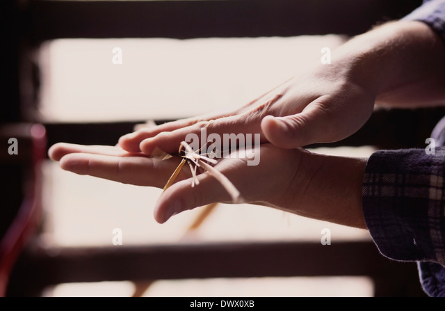 Cropped image of farmer rubbing straw with hands in barn - Stock Image