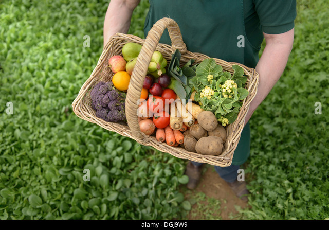 Farmer carrying organic vegetables in basket for delivery, close up - Stock Image