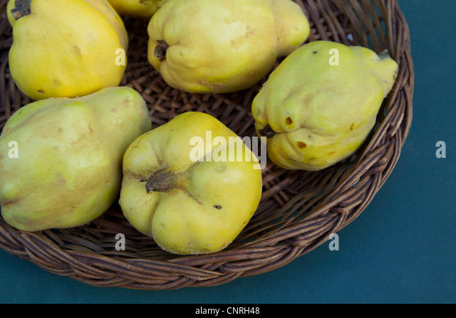 Quinces in basket, cropped - Stock Image