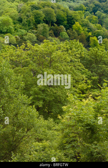 Looking down on an area of woodland in Hampshire UK. - Stock Image