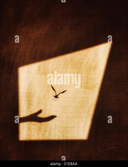 Shadow of hand realising bird on a window curtain to show the concept of flight for freedom - Stock-Bilder
