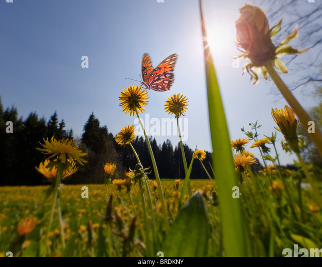 ENVIRONMENTAL CONCEPT: Spring Meadow (Germany/ Bavaria) - Stock Image
