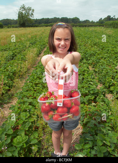 young girl picking strawberries in field during summer - Stock Image