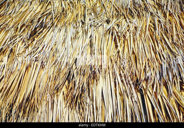 Dried Palm Stock Photos Amp Dried Palm Stock Images Alamy