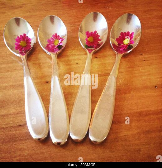 Four spoons each holding a small pink daisy and set on a wood table - Stock Image