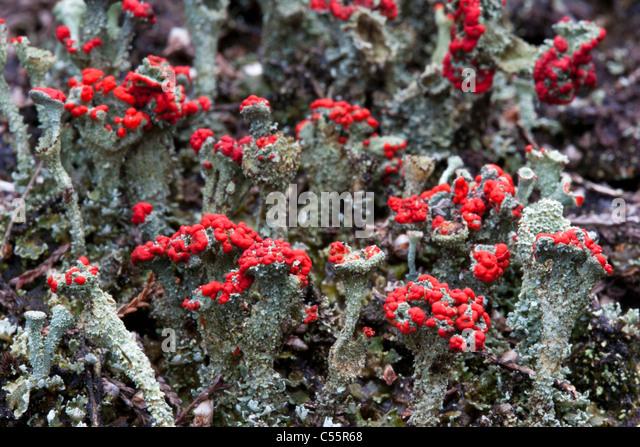 The Netherlands, Loon op Zand, National Park De Loonse en Drunense Duinen. Typical plants. - Stock-Bilder