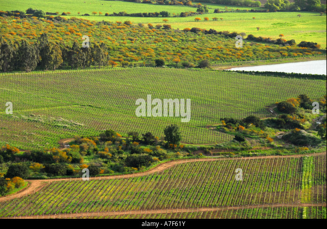 Chile wine country above Colchagua Valley vineyards - Stock Image