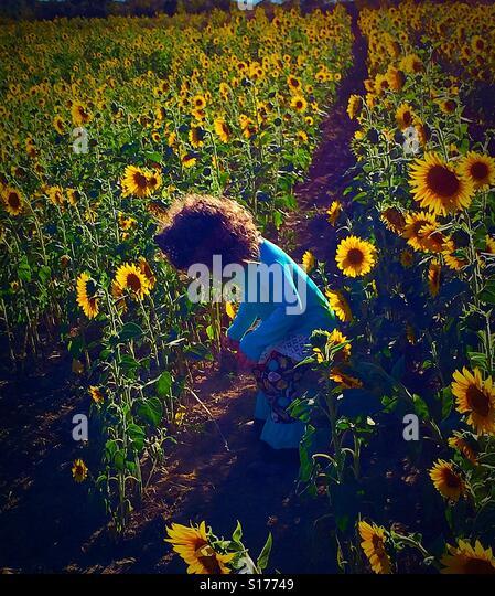 Sunflower pickin - Stock-Bilder