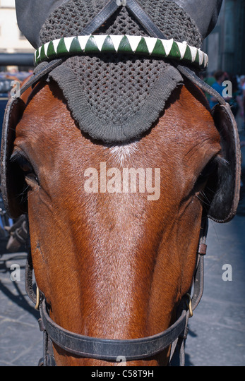 A close up view of a horse's head and bridle in the Pizzia della Duomo in Florence, Italy. - Stock Image