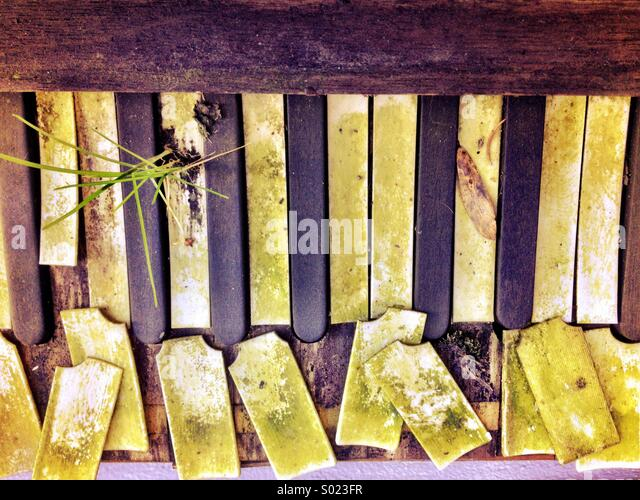 Old piano left outside with a weed growing through its broken keys - Stock Image